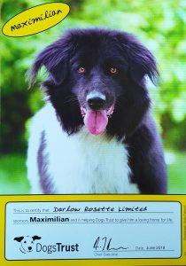 Darlow Rosettes sponsored dog